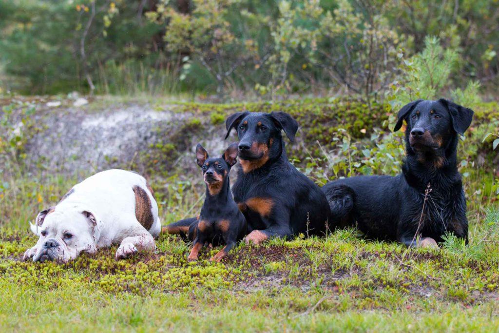 Entspannte Hunde durch die richtige Hundeerziehung