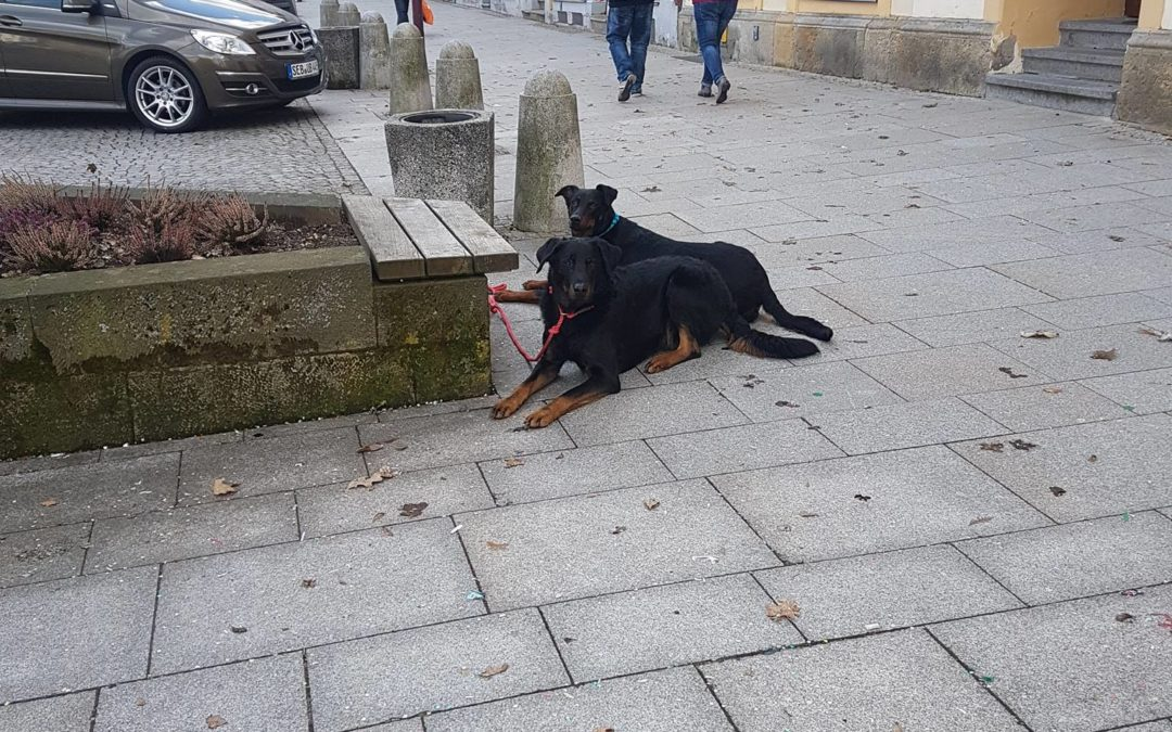 Stadttraining.. Hunde ablegen und einfach mal weg gehen.. Wer mehr wissen möchte...