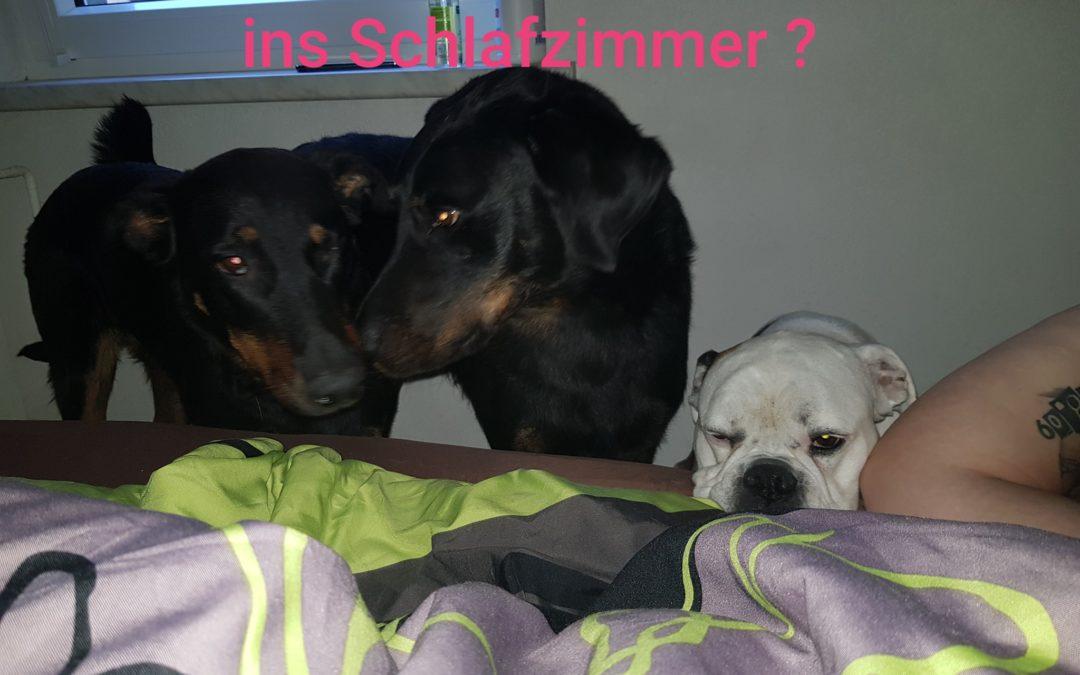 Also meine Hunde dürfen ganz klar mit ins Schlafzimmer wie ist das bei euch I…