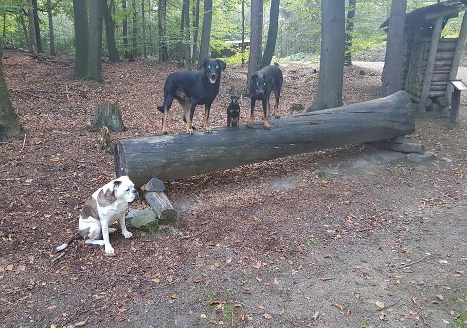 Geht raus in die Natur und habt Spaß mit euren Hunden.  Es gibt keine bessere Th…