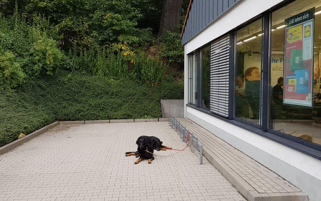 Schön wenn man sich auf seine Hunde verlassen kann. Anständig warten vorm Superm...