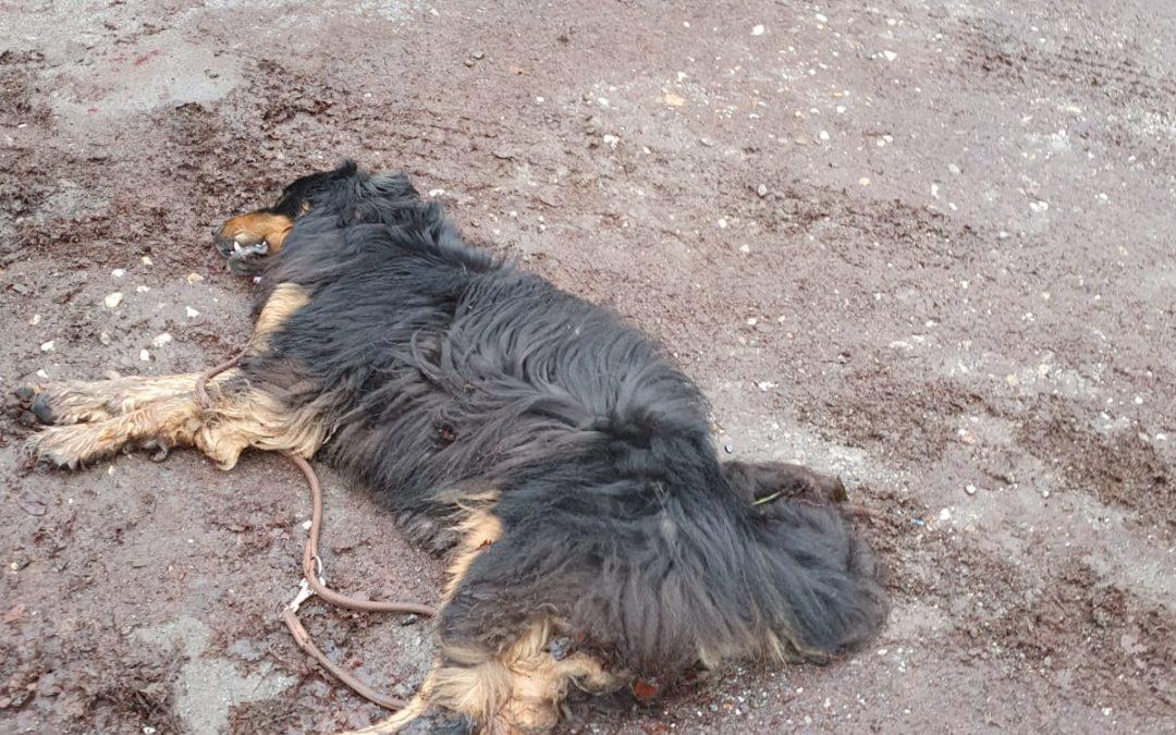Aus aktuell traurigen Anlass   Holt eure Hunde in Begegnungen mit anderen Mitmen…