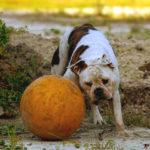 Bild eines Hundes, der mit einem Ball spielt